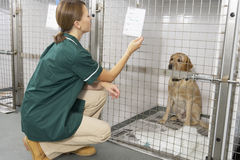 Vetinary Nurse Checking Sick Animals In Pens Royalty Free Stock Images