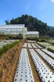 Vetiver glass protecting soil slide Stock Photography