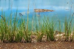 Vetiver grass stock photos