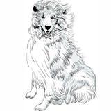 Vetor áspero do desenho da mão da raça da collie do cão do esboço do vetor Foto de Stock Royalty Free