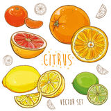 Vetor ajustado com citrinos: limão, cal, laranja, tangerina Imagem de Stock Royalty Free