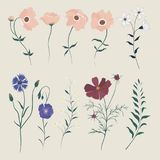 Vetor ajustado com flores selvagens Fotografia de Stock
