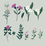 Vetor ajustado com flores selvagens Coleção isolada Imagens de Stock