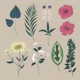 Vetor ajustado com flores selvagens Coleção isolada Imagem de Stock Royalty Free