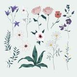 Vetor ajustado com flores selvagens Coleção isolada Fotos de Stock Royalty Free