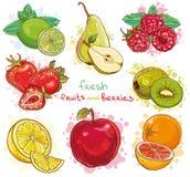 Vetor ajustado com frutos frescos e bagas Foto de Stock