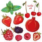Vetor ajustado com frutos pequenos, bagas Fotos de Stock Royalty Free