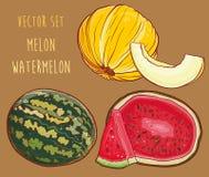 Vetor ajustado com melão e a melancia frescos Imagem de Stock Royalty Free