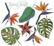 Vetor ajustado tropical floral da garatuja com as plantas coloridas das garatujas Flores de paraíso brilhantes com as folhas verd ilustração stock