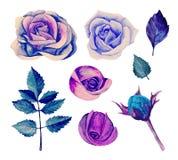 Vetor azul das rosas da aquarela Fotografia de Stock Royalty Free