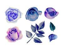 Vetor azul das rosas da aquarela Fotografia de Stock