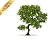Vetor bonito da árvore em um fundo branco Fotos de Stock