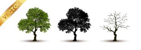 Vetor bonito da árvore em um fundo branco Imagem de Stock Royalty Free