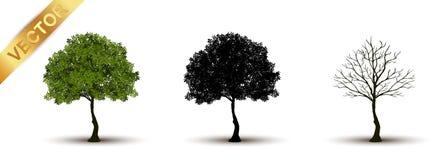 Vetor bonito da árvore em um fundo branco Foto de Stock Royalty Free