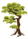 Vetor bonito da árvore em um fundo branco Fotografia de Stock Royalty Free