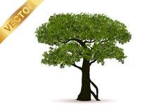 Vetor bonito da árvore em um fundo branco Imagens de Stock Royalty Free