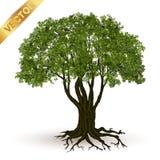 Vetor bonito da árvore em um fundo branco Imagem de Stock