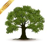 Vetor bonito da árvore em um fundo branco Fotografia de Stock