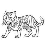 Vetor bonito da página da coloração do tigre dos desenhos animados Fotografia de Stock Royalty Free