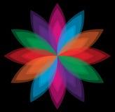 Vetor colorido da flor no fundo preto Foto de Stock