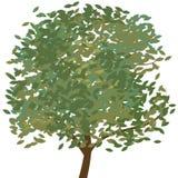 Vetor da árvore ilustração stock