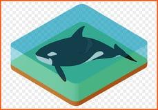 Vetor da baleia de assassino Fotos de Stock