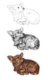 Vetor da chihuahua curiosa ilustração royalty free