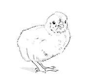 Vetor da galinha preto e branco Fotos de Stock Royalty Free