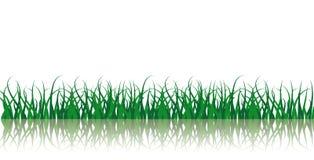 Vetor da grama verde ilustração stock