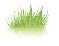 Vetor da grama verde Fotografia de Stock Royalty Free