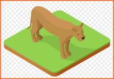 Vetor da leoa isométrico Fotos de Stock Royalty Free