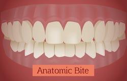 Vetor da mordida dos dentes ilustração do vetor