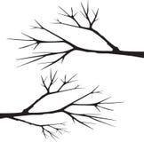 Vetor da silhueta do ramo de árvore Fotos de Stock Royalty Free