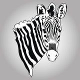 Vetor da zebra Fotografia de Stock Royalty Free