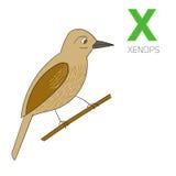 Vetor das crianças dos xenops da letra X do alfabeto Foto de Stock Royalty Free