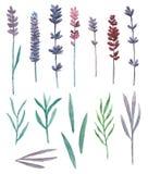 Vetor das flores selvagens da aquarela e do campo de grama Fotografia de Stock