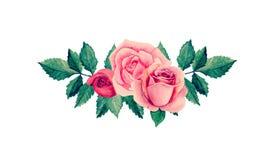 Vetor das rosas da aquarela Fotografia de Stock