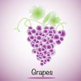 Vetor das uvas Frutas e verdura Imagem de Stock