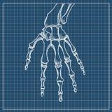 Vetor de esqueleto da mão Esboço com os ossos de mão no fundo branco Fotos de Stock Royalty Free
