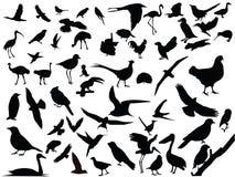 Vetor de pássaros isolados Fotos de Stock Royalty Free