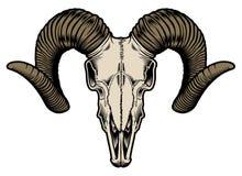 Vetor do crânio da cabra Imagens de Stock Royalty Free