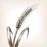 Vetor do estilo do esboço da orelha do trigo Fotografia de Stock Royalty Free
