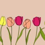 Vetor do fundo da beira da flor da tulipa Fotos de Stock Royalty Free