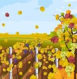 Vetor do fundo do outono do vinhedo Cartão das decorações da queda ilustração do vetor