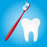 Vetor do Toothbrush e do dente Imagem de Stock