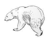 Vetor do urso polar Imagens de Stock