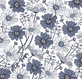 Vetor dos Wildflowers da grama da camomila Desenho, gravura Flores realísticas azuis brancas de florescência do fundo bonito do v Imagem de Stock Royalty Free