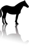 Vetor ereto da reflexão da silhueta do cavalo ilustração royalty free