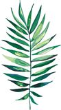 Vetor erval floral tropical maravilhoso bonito brilhante bonito da folha de palmeira do verde do verão de Havaí Imagem de Stock