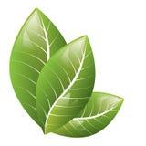 Vetor Folhas bonitas do verde em um fundo branco ilustração stock